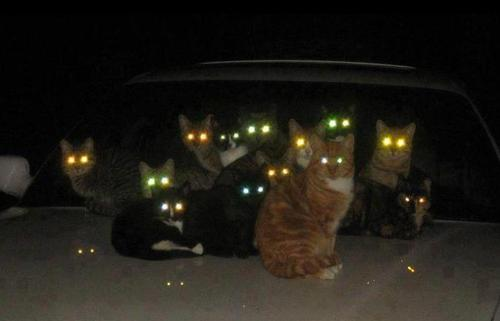laser-cat-gang-kitten-kitty-pic-picture-funny-lolcat-cute-fun-lovely-photo-images